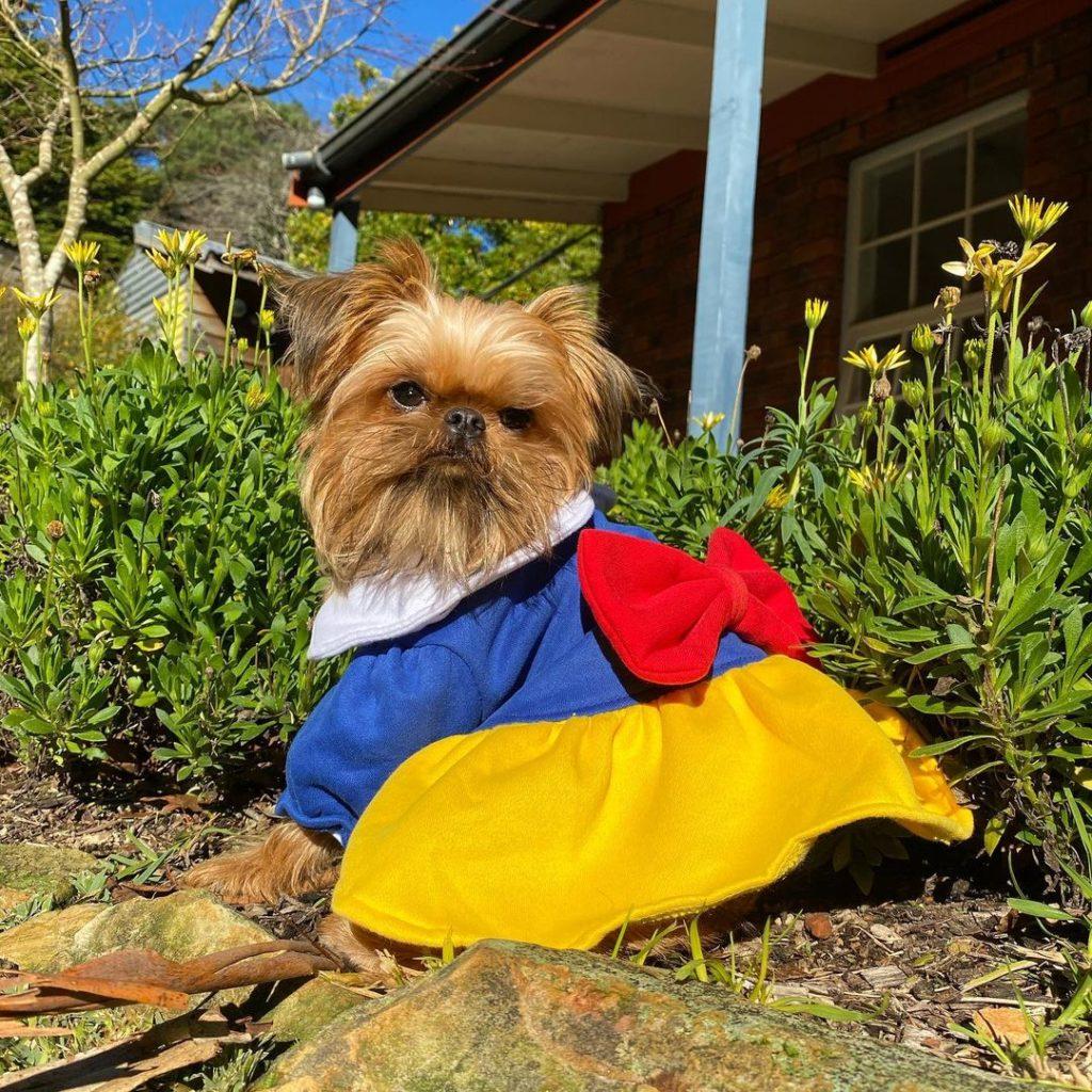 dog in snow white costume