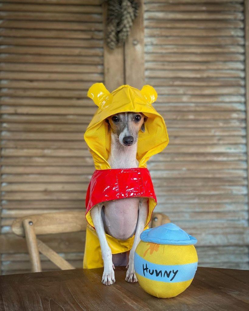 dog in winnie the pooh costume