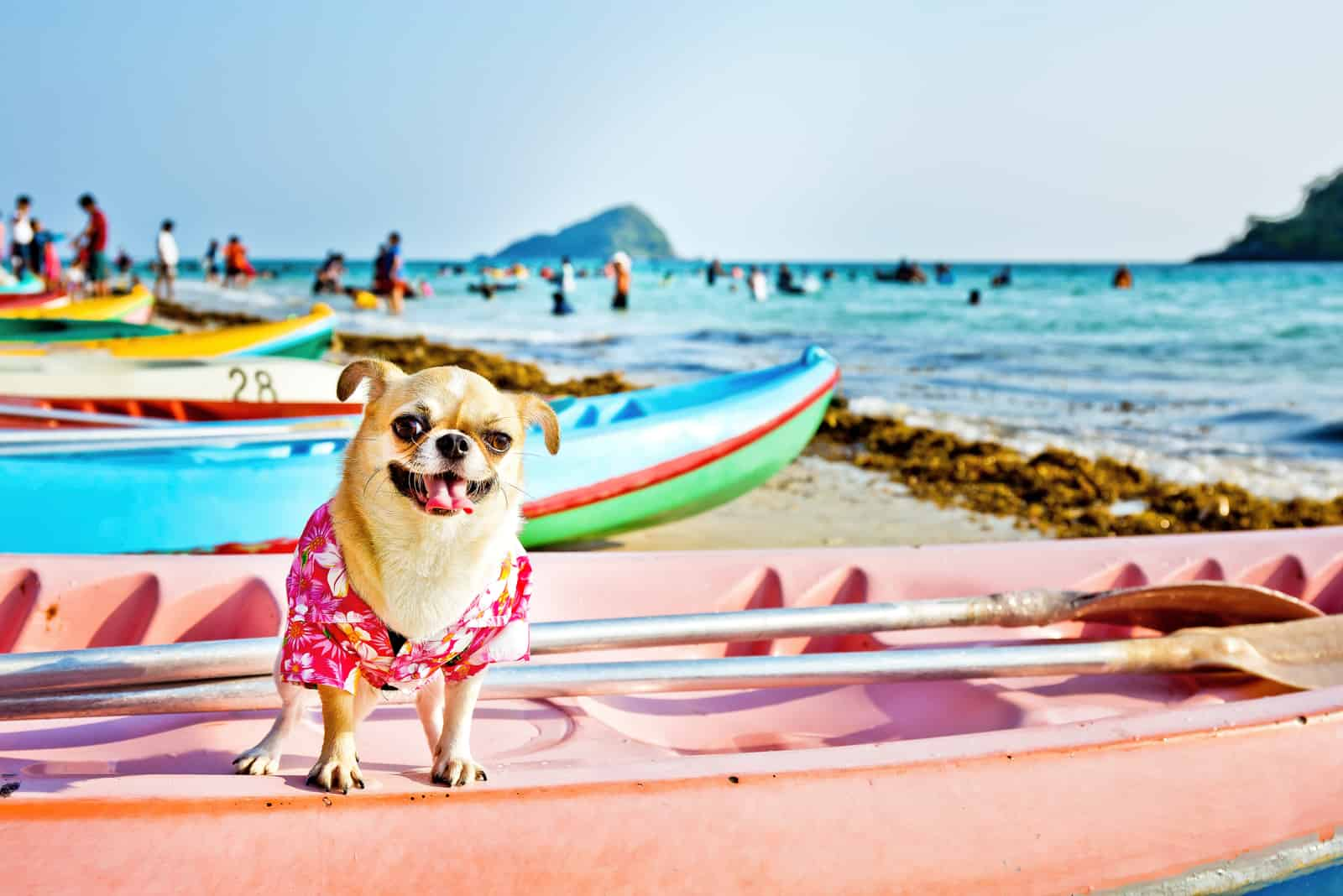 dog on a surfboard wearing hawaiian shirt