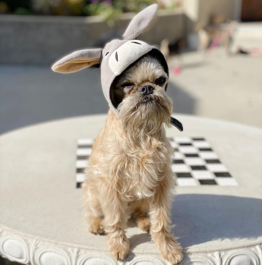 dog wearing eeyore hat