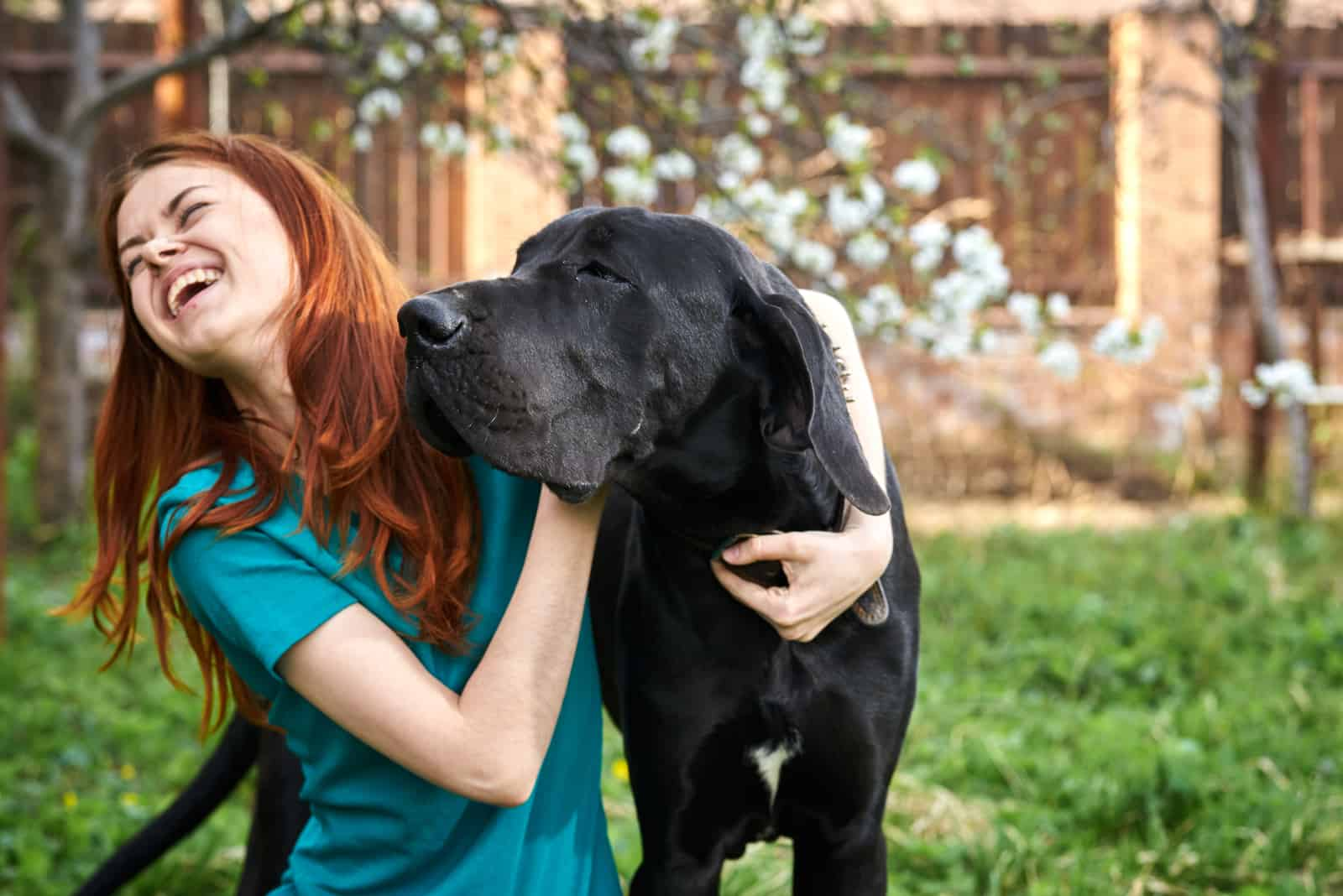 girl laughing with her great dane
