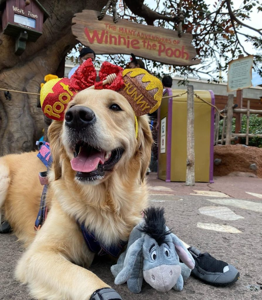 golden retriever with eeyore toy and winnie the pooh ears