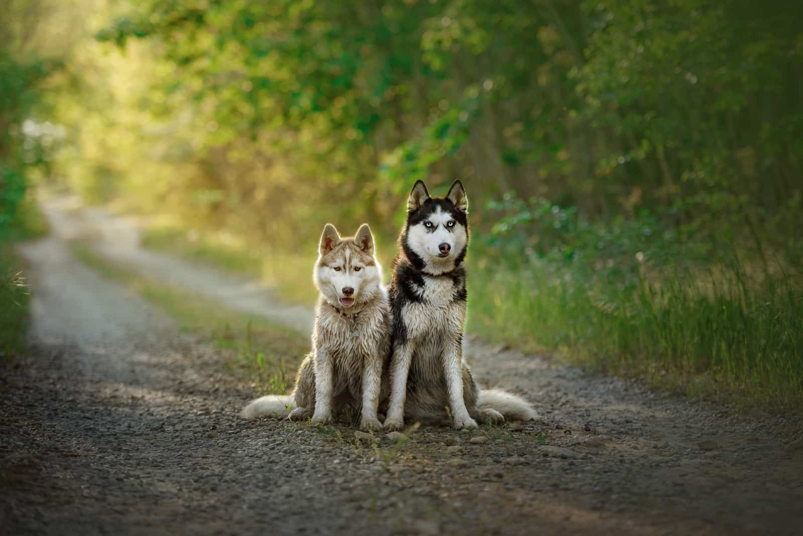 two beautiful dogs in forest