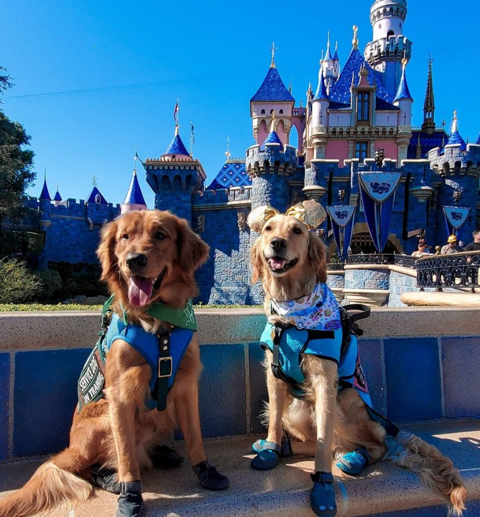 two retrievers in front of disneyworld