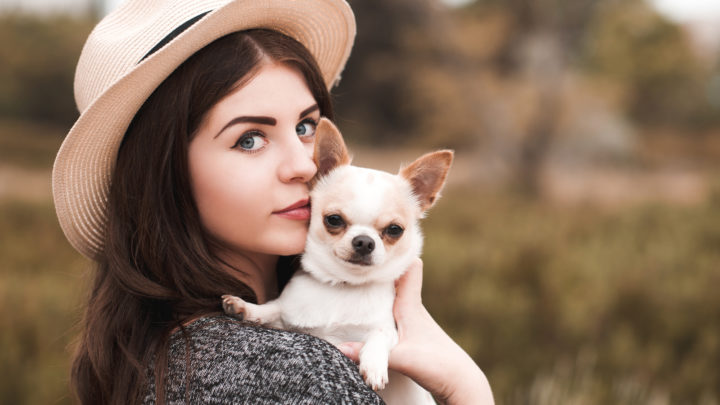 Chihuahua Breeders: A Guide To The Best Breeders In The US