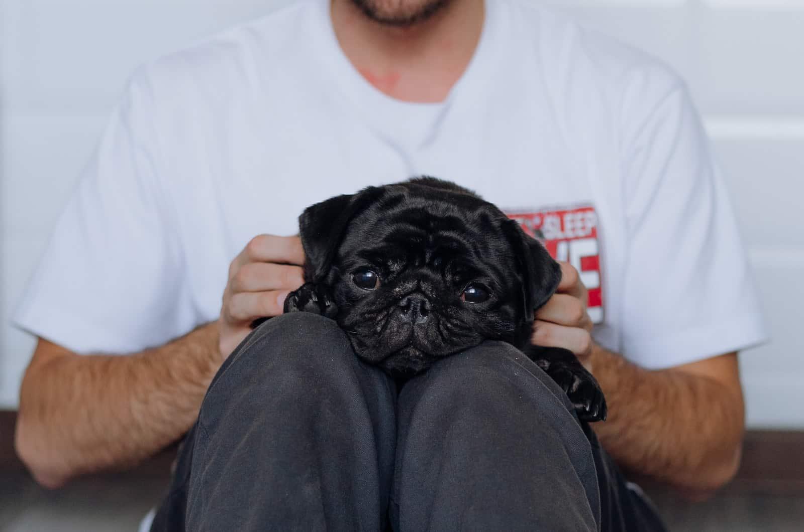 owner holding their black pug